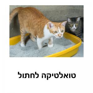 טואלטיקה לחתול